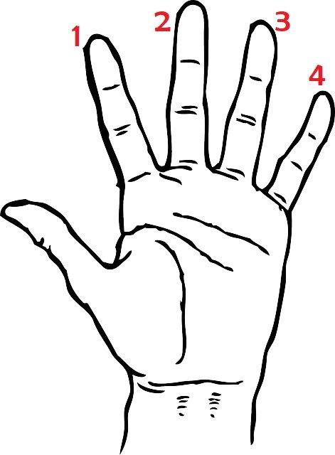 dedos da mao esquerda